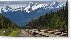 Bears On A Track Acrylic Print