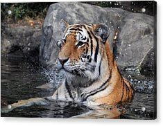 Beating The Heat Acrylic Print by Mike Martin
