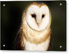 Beautiful Barn Owl Acrylic Print by Paulette Thomas