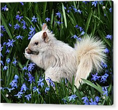 Beautiful Blue Eyes Acrylic Print