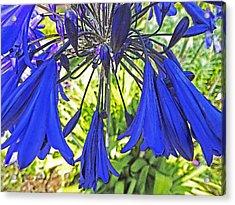 Beautiful Bluebells Close-up Acrylic Print by Anne Mott
