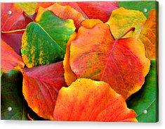 Beautiful Fall Leaves  Acrylic Print