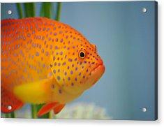 Beautiful Fish Acrylic Print by Michael Krahl