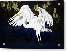 Beautiful Great White Egret Acrylic Print by Paulette Thomas