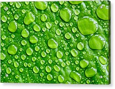 Beautiful Green Leaf With  Water Drops Acrylic Print by Chatuporn Sornlampoo