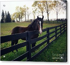 Beautiful Horse In Pasture Nature Landscape Acrylic Print by Kathy Fornal