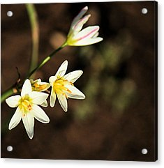 Beautiful Simplicity Acrylic Print