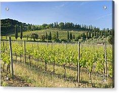 Beautiful Vineyard Acrylic Print by Rob Tilley