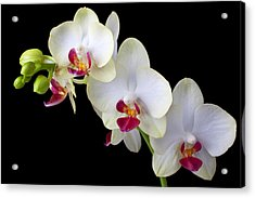 Beautiful White Orchids Acrylic Print by Garry Gay