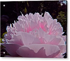 Beauty In Blossom Acrylic Print by Randy Rosenberger