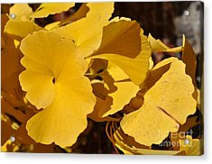 Beauty In The Leaves Acrylic Print by Denise Ellis