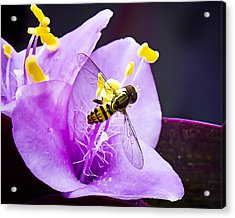 Beauty Invaded Acrylic Print by Michael Putnam