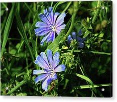 Beauty Of The Field Acrylic Print