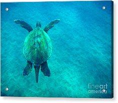 Beauty Of The Sea Acrylic Print by Bob Christopher