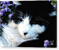 Beauty Sleep Acrylic Print