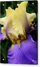 Beauty Within Acrylic Print by Bruce Bley