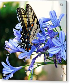 Beautyrest Acrylic Print by LC  Linda Scott