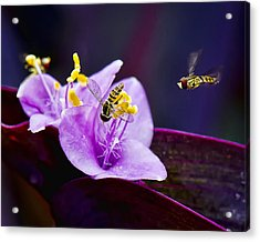 Beauty's Visitors Acrylic Print by Michael Putnam