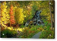 Beaver Brook  Acrylic Print