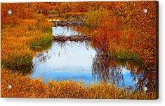 Beaver Ponds Acrylic Print by Terril Heilman