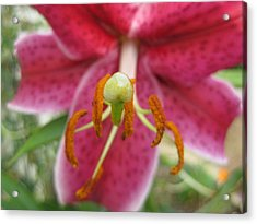 Beckoning Acrylic Print by Judy Via-Wolff