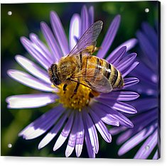 Acrylic Print featuring the photograph Bee by Anna Rumiantseva