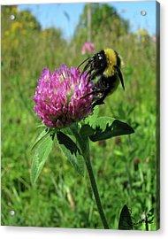 Bee-autiful  Acrylic Print by Sarah  Lalonde