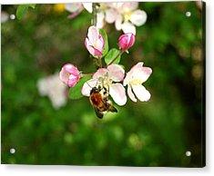 Bee Blossom Acrylic Print