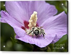 Acrylic Print featuring the photograph Bee Covered In Pollen  by Jeannette Hunt