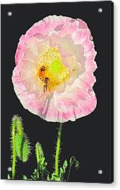 Bee Friendly Acrylic Print by Myrna Migala