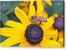 Bee Hanging Out With Susan Acrylic Print