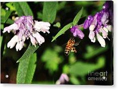 Bee In Flight Acrylic Print by Kaye Menner