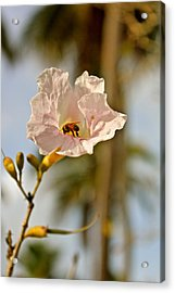 Bee In Paradise Acrylic Print by Felix Zapata