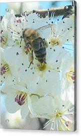 Bee Nice Acrylic Print by Wide Awake Arts
