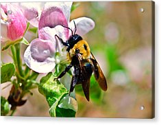 Acrylic Print featuring the photograph Bee On An Apple Blossom by Susan Leggett