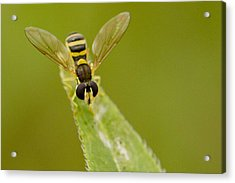 Bee On Belief  Acrylic Print by Dean Bennett