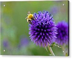 Bee On Garden Flower Acrylic Print