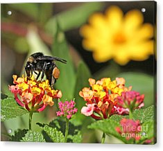 Acrylic Print featuring the photograph Bee On Lantana Flower by Luana K Perez