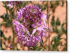 Bee Plant Acrylic Print