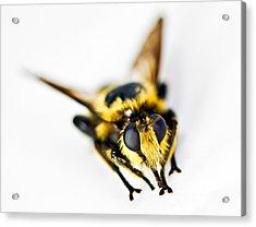 Bee Acrylic Print by Susan Leggett