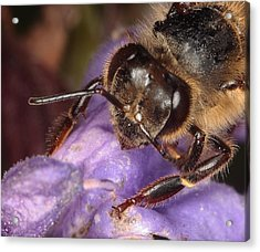 Acrylic Print featuring the photograph Bee Up Close And Personal by Charles Dana