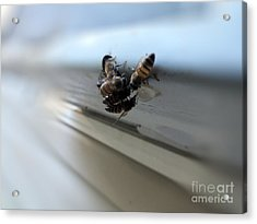 Bee Watering Hole Acrylic Print by Tammy Herrin