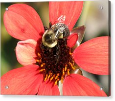 Bee With Flower Acrylic Print