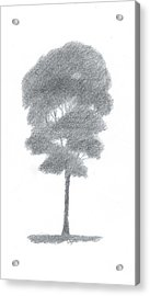 Beech Tree Drawing Number One Acrylic Print by Alan Daysh