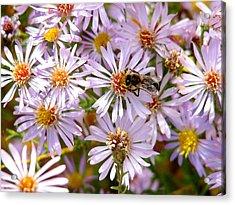 Beeflowers Acrylic Print