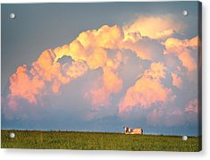 Acrylic Print featuring the photograph Beefy Thunder by Brian Duram