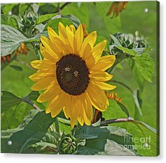 Bees And The Sun Acrylic Print
