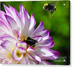 Acrylic Print featuring the photograph Bees N Blooms by Jack Moskovita