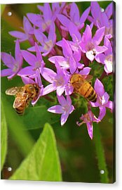 Bees One Acrylic Print by Craig Wood