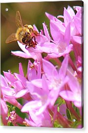Bees Two Acrylic Print by Craig Wood